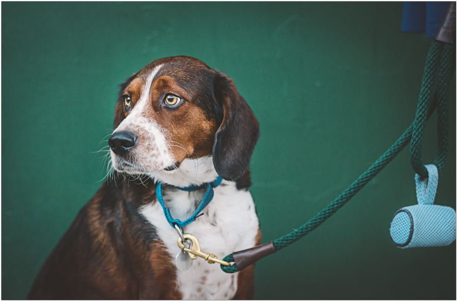 brooklyn dog portrait