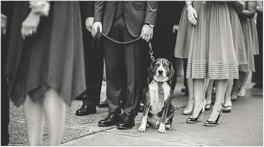 23-Wedding-Dog